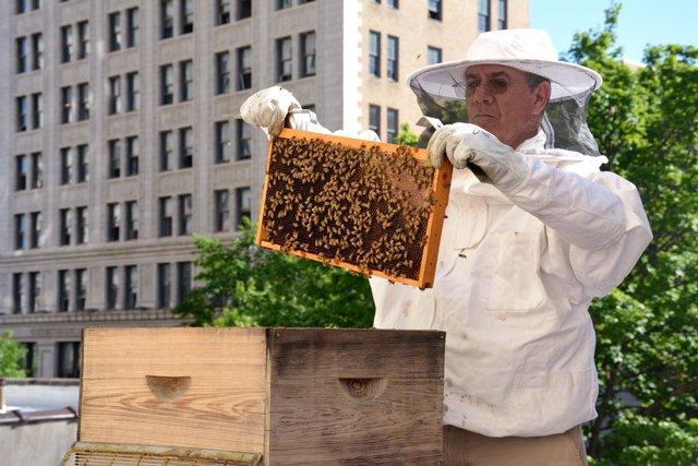 ICI-FEAT-City-Bee-Co2.jpg