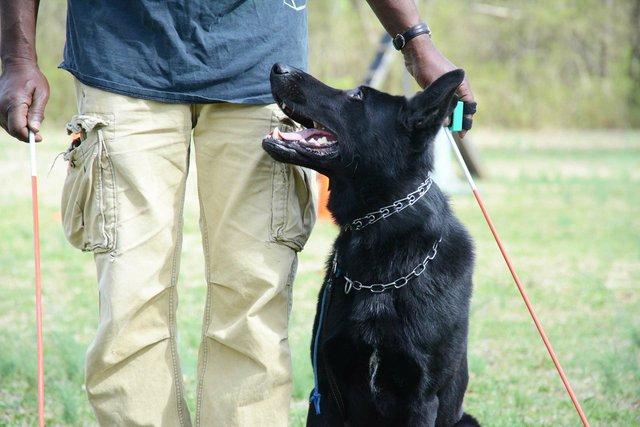 ICI-BIZARRE-Schutzhund1.jpg