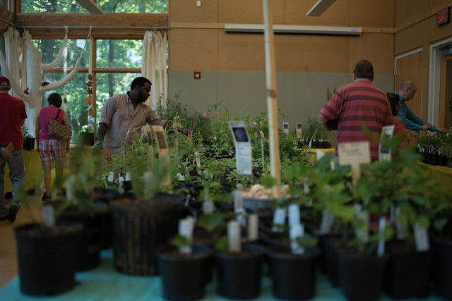 ruffner native plant sale 2017
