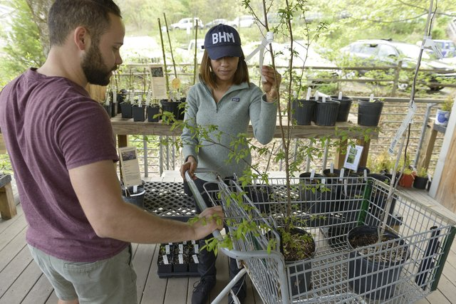 Ruffner Native Plant Sale 2019
